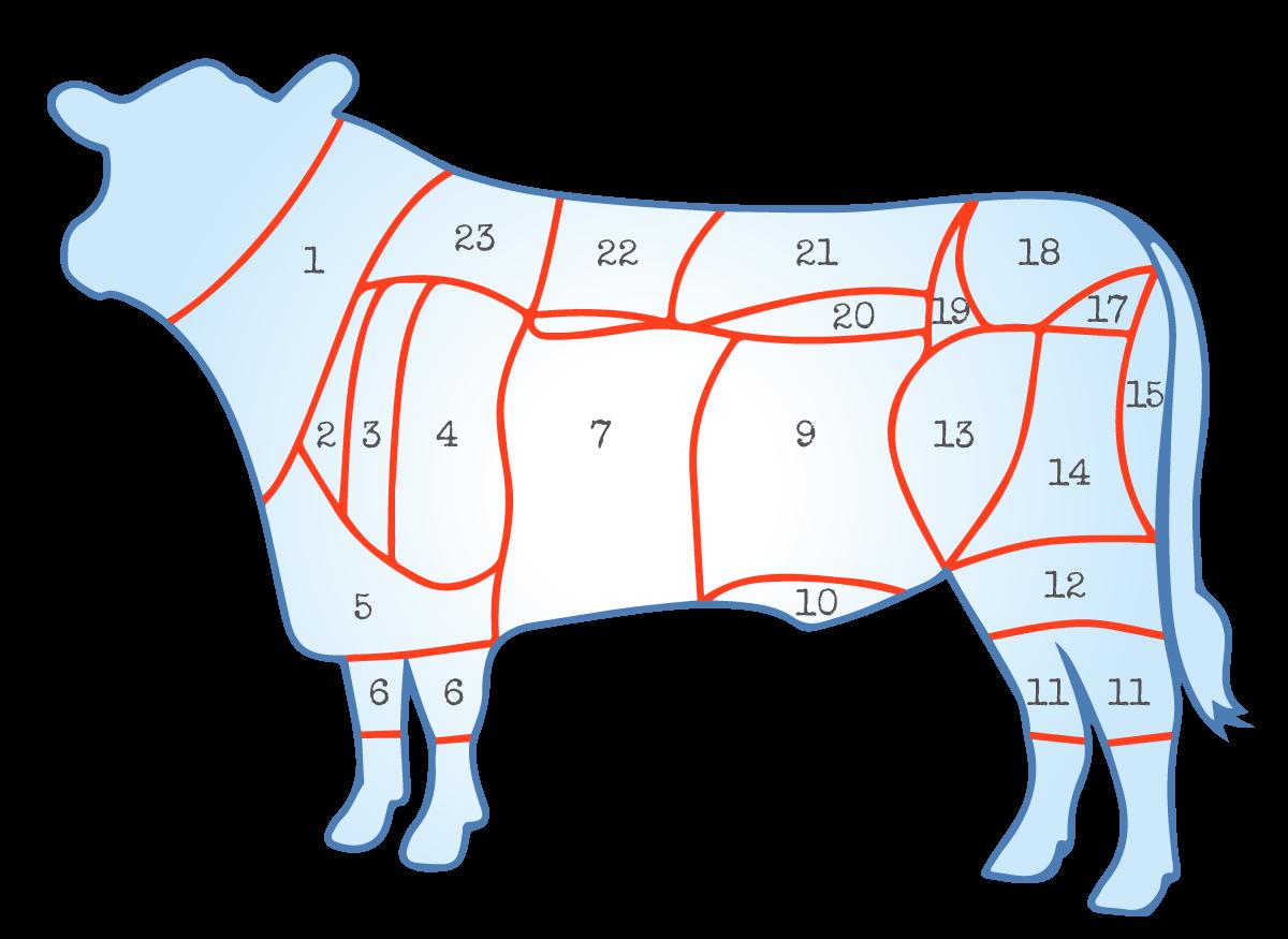 Fleischkunde Rind